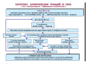 патогенез, реакции четвертого типа