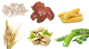 Микро- и макроэлементы, источники молибдена, продукты питания