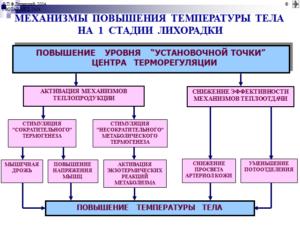Механизмы повышения 1 стадия лихорадки