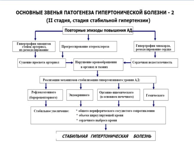 Артериальная гипертензия, патогенез, 2 стадия