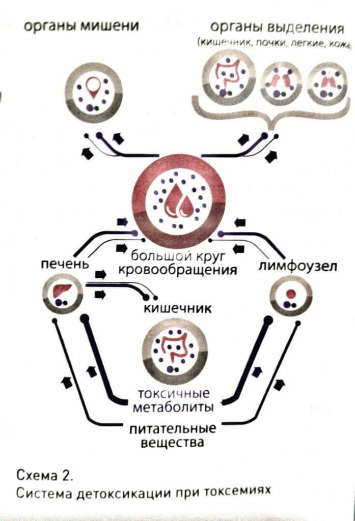 Система детоксикации организма