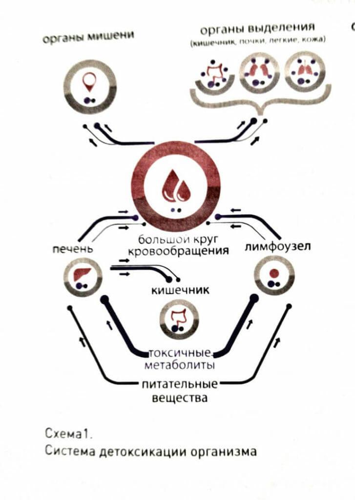 Система детоксикации при токсемиях
